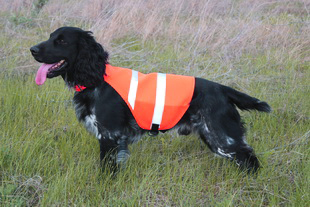 safety dog vest ss310