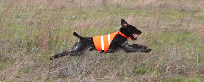 safety dog vest ss650